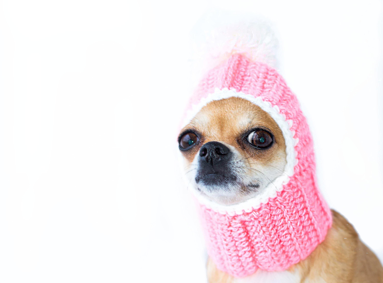 Rosa Hund Hut häkeln Mädchen Hund Hut warme Strickmütze Hund