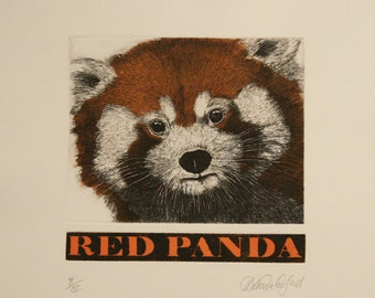 Red Panda - Etching and Aquatint with hand-etched title by D.R. Wakefield