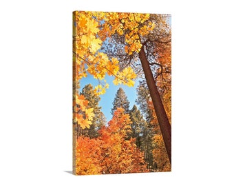 Fall Forest Art Print, Tree Photography, Maple Leaf Art, Autumn Leaves, Fall Colors, Nature Photography, Catalina Mountains, Tucson Gift