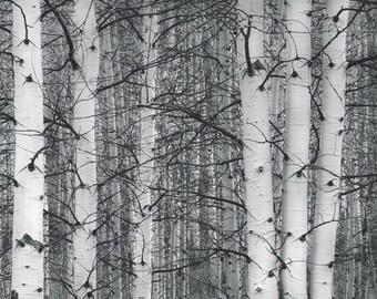Aspens trees photo, Colorado art, aspen tree wall art, Black White photo, rustic woods art, rustic wall decor, log cabin decor | Entangled