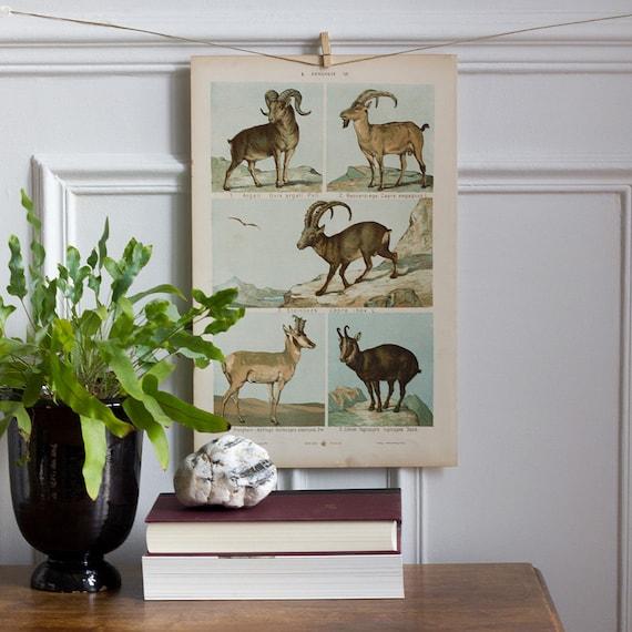 Alpine Animal Color Bookplate - Farm Animals