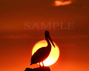 Limited edition 1 of 1 Fine art photography. Wildlife, pelican at sunset, sunset.