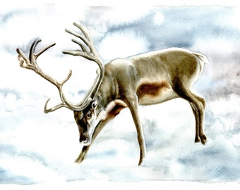"""WINTER DEER - Watercolor Painting Print, 7.5""""x9.5"""" and 11x14, soft greys and browns"""
