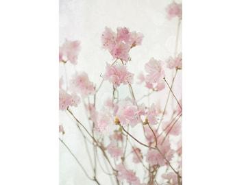 Azalea Flower Still Life, Azalea Photo, Floral Art Print,  Flower Photography, Pink Wall Decor