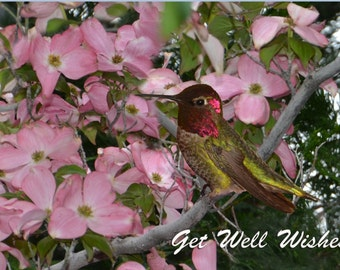 Get Well Greeting Card - Anna's Hummingbird