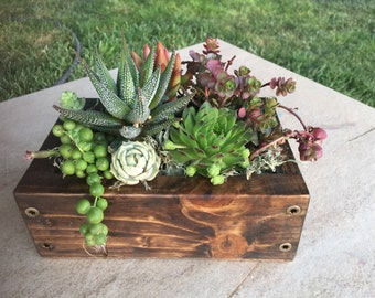 Live Succulent garden arrangement for Mother's Day-in wood planter. The gift that keeps giving. Window box. Haworthia, Floral gift