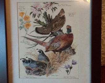 Vintage botanical print, flowers and birds, framed