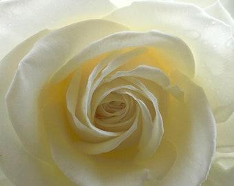 Virgin white petals