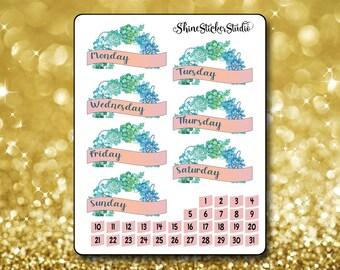 Sweet Succulents Date Cover Stickers - Planner Stickers Erin Condren Life ECLP Stickers Happy Planner Succulent Stickers