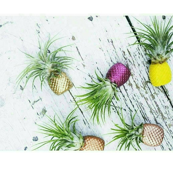 1 Pineapple Magnet/Air Plant magnet/Pineapple decor/Air Plant Holder/Air Planter/Concrete Planter/Bridesmaid Gift/Pineapple/Office Planter