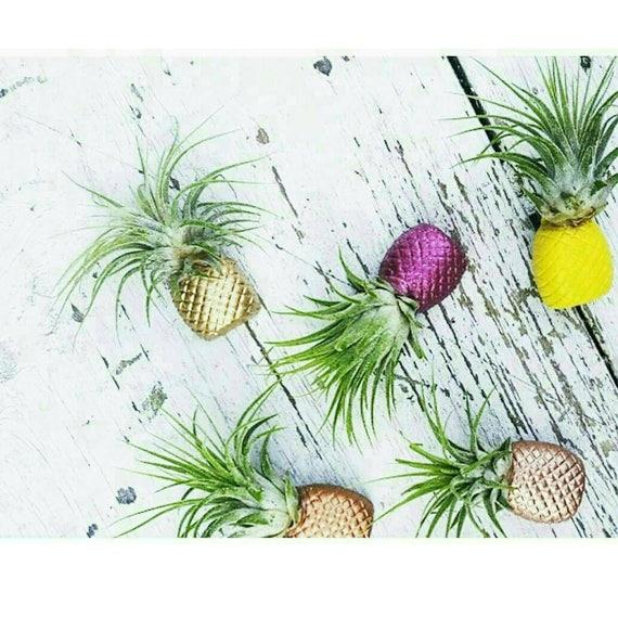 1 Pineapple Magnet/Air Plant/Pineapple decor/Air Plant Holder/Air Planter/Bridesmaid Gift/Pineapple/Home Decor/Pineapple planter
