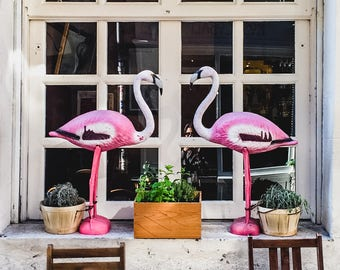 "France Travel Photography, ""Pink Flamingo Pair"", Gallery Wall Art Prints, Home Decor"
