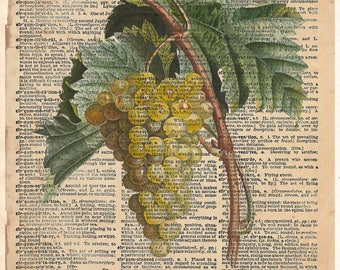 Grape art, white grapes, wine lover art, old botanical illustration, nature artwork print on dictionary page