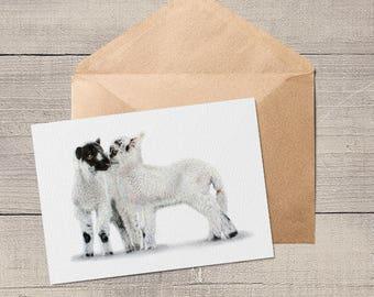 Cute Lambs Animal Artist Blank Card