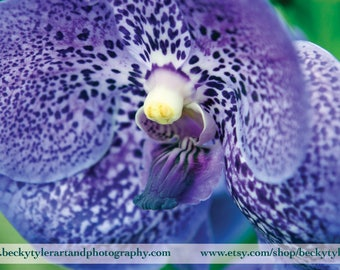Vanda Orchid Macro Fine Art Photo Print