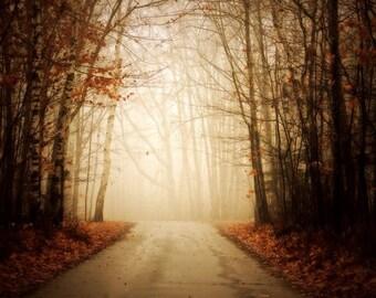 landscape photography nature fine art photography autumn orange leaves woodland