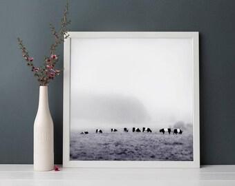 Cow Art Print, Farm Animal Photography, Belted Galloway Cow Artwork, Minimalist Art, Animal Art Print, Cow Photo