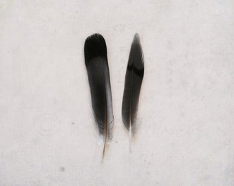 Two Feathers Fine Art 8x10 Print. Natural History. Birds, Nature, Feathers, Texture, Muted, Neutral, Gray Decor