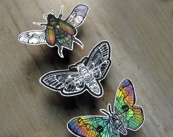 Insect  Zentangle Decal Set - Waterproof Stickers Scarab Moth Butterfly Bug