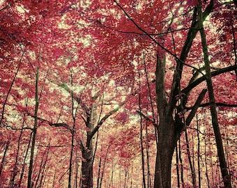 Hallucination - Nature Photography, Surreal Haunting Woodlands, FantasyPhotography, Nature Photo, Pink Photo