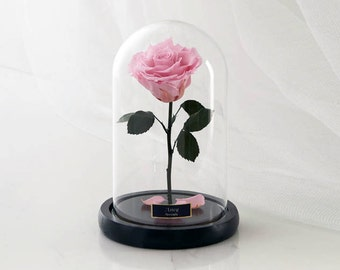 Beauty and the Beast Rose, Enchanted Rose, Rose in glass dome, Forever Rose, Disney Belle Rose, Preserved Rose, Eternal Rose, Proposal Gift
