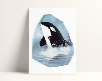Illustrated postcard - 12, 7 x 17, 8 cm - killer whale