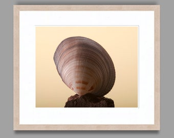 SEASHELL #3 - Framed Art Photography, Home Decor, Wall Art, Nature, beach, seashells, ocean