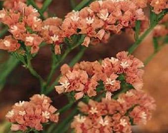 Apricot Beauty Statice Flower Seeds/Limonium/Annual 50+