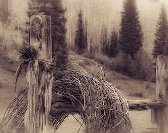 Barbwire vintage photo, aspen trees fall photo, pine trees print, western photography, rustic home decor, log cabin decor, old west photo