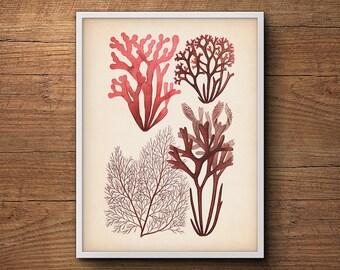 Coastal Decor, Seaweed Art, Watercolor Print, Scientific Illustration, Coastal Print, Botanical, Coastal Prints, Beach Decor