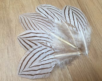 Silver Pheasant feathers - unique feathers, uncommon feathers, black and white feathers, natural feathers, real feathers, lovely feathers