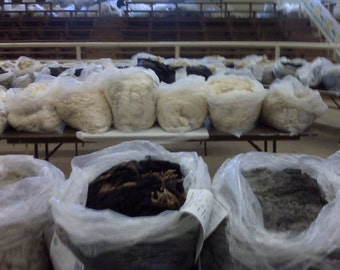 Wool Fleece, Unwashed 2.5 pounds