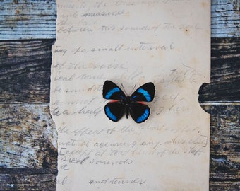 Butterfly 2 ~ Photography Print