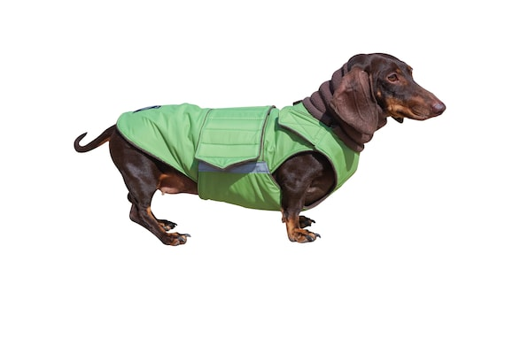 Dachshund Winter Dog Coat With Full Belly Cover And Neck