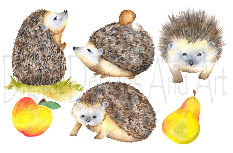 Watercolor hedgehog clipart, porcupine clipart, Forest ...