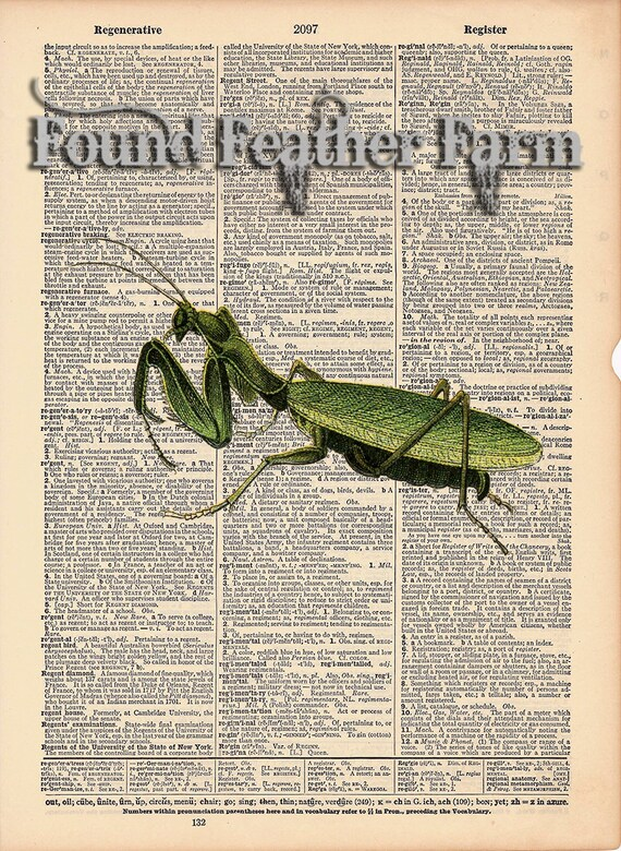 """Vintage Antique Dictionary Page with Antique Print """"Praying Mantis"""""""