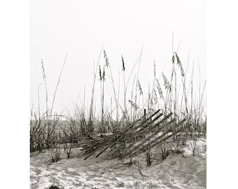 Beach Fence Photograph