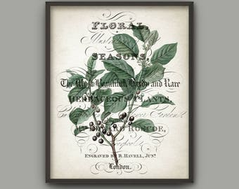 Green Leaves Art Print, Botanical Print, Vintage Wall Art, Green Leaf, Woodland Plant, Botanical Home Decor, Tree Branch Book Plate B782