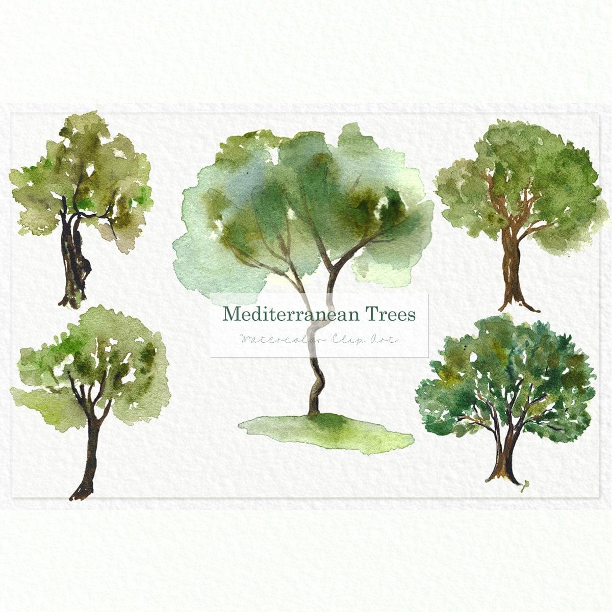 Mediterranean TREES. Watercolor clip art. Digital Watercolours