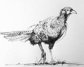 Pheasant - Original ink sketch