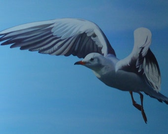 Chaika - Black-headed Gull Flying in the blue sky - Oil painting on canvas - Black-headed Gull in flight in sky blue