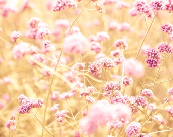 Pink flowers, shabby chic, nature photography, autumn flowers, amber, honey gold, honeysuckle pink, feminine, BFF, bokeh, landscape