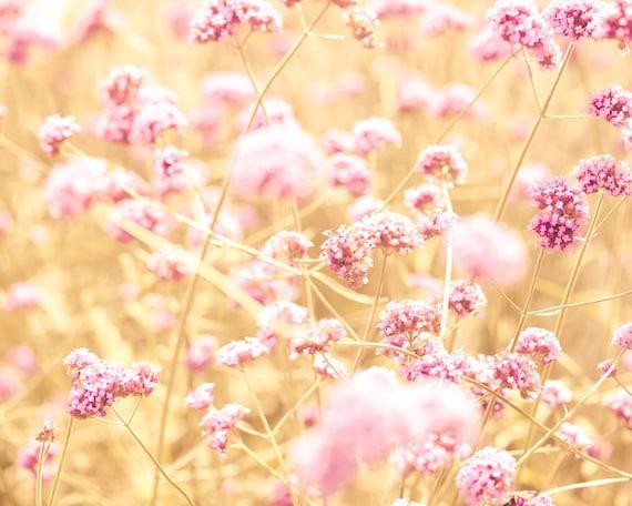 Pink flowers shabby chic nature photography autumn flowers pink flowers shabby chic nature photography autumn flowers amber honey gold honeysuckle pink feminine bff bokeh landscape mightylinksfo