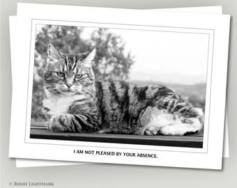 "Funny Cats, Miss you greeting card, ""I am not pleased by your absence,"" tabby cat, grumpy cat, black and white photo"