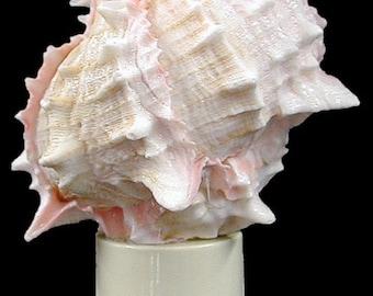 Real Seashell Night Light Pink Murex Shell Decorative Beach Decor