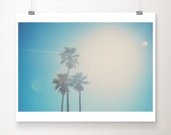 palm tree photograph palm tree print Santa Cruz photograph california photograph Santa Cruz print California print