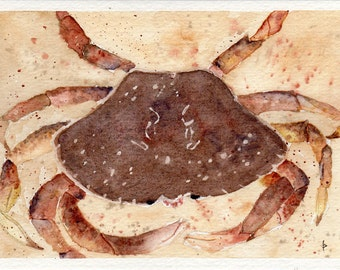 Original watercolor painting GREETING card SFA crab