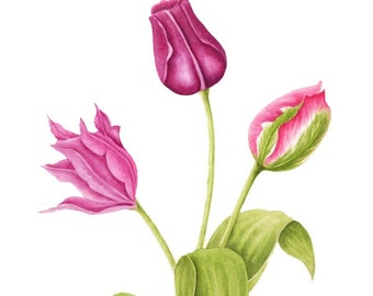 Spring Tulips - Watercolor Painting