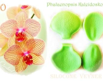 Orchid Phalaenopsis / Kaleidoskope/   Silicone  Veyner