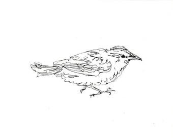 Skizzenbuch Verkauf - Vogel #15 Original Tuschezeichnung - 8 x 10 Songbird Original-Kunst